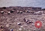 Image of dead bodies Tinian Island Mariana Islands, 1944, second 34 stock footage video 65675050848