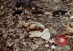 Image of dead bodies Tinian Island Mariana Islands, 1944, second 46 stock footage video 65675050848