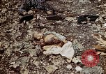 Image of dead bodies Tinian Island Mariana Islands, 1944, second 47 stock footage video 65675050848