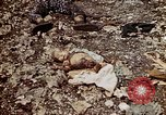 Image of dead bodies Tinian Island Mariana Islands, 1944, second 48 stock footage video 65675050848