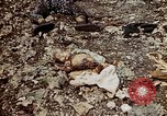 Image of dead bodies Tinian Island Mariana Islands, 1944, second 49 stock footage video 65675050848