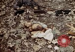 Image of dead bodies Tinian Island Mariana Islands, 1944, second 50 stock footage video 65675050848