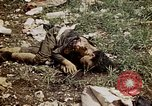 Image of dead bodies Tinian Island Mariana Islands, 1944, second 53 stock footage video 65675050848