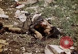 Image of dead bodies Tinian Island Mariana Islands, 1944, second 55 stock footage video 65675050848