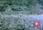 Image of 4th Marine Division Tinian Island Mariana Islands, 1944, second 6 stock footage video 65675050863