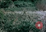 Image of 4th Marine Division Tinian Island Mariana Islands, 1944, second 13 stock footage video 65675050863