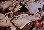 Image of atrocity victims Tinian Island Mariana Islands, 1944, second 38 stock footage video 65675050865