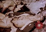 Image of atrocity victims Tinian Island Mariana Islands, 1944, second 39 stock footage video 65675050865