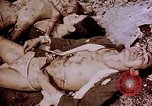 Image of atrocity victims Tinian Island Mariana Islands, 1944, second 46 stock footage video 65675050865