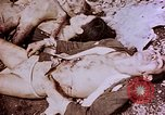 Image of atrocity victims Tinian Island Mariana Islands, 1944, second 47 stock footage video 65675050865