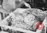 Image of production of chewing gums United States USA, 1919, second 39 stock footage video 65675050979