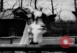 Image of baby animals Germany, 1960, second 10 stock footage video 65675051183