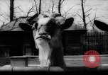 Image of baby animals Germany, 1960, second 11 stock footage video 65675051183
