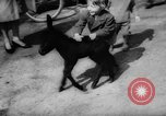 Image of baby animals Germany, 1960, second 16 stock footage video 65675051183