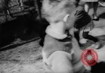 Image of baby animals Germany, 1960, second 17 stock footage video 65675051183