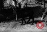 Image of baby animals Germany, 1960, second 18 stock footage video 65675051183