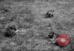 Image of baby animals Germany, 1960, second 23 stock footage video 65675051183
