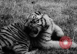 Image of baby animals Germany, 1960, second 25 stock footage video 65675051183