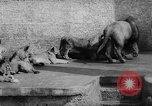 Image of baby animals Germany, 1960, second 26 stock footage video 65675051183