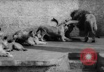 Image of baby animals Germany, 1960, second 27 stock footage video 65675051183