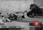 Image of baby animals Germany, 1960, second 28 stock footage video 65675051183