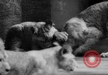 Image of baby animals Germany, 1960, second 31 stock footage video 65675051183