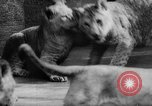 Image of baby animals Germany, 1960, second 32 stock footage video 65675051183