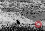 Image of grizzly bear Alaska United States USA, 1929, second 52 stock footage video 65675051271