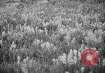 Image of igloo creek Alaska United States USA, 1925, second 15 stock footage video 65675051279