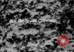 Image of herd of Caribou Alaska USA, 1929, second 41 stock footage video 65675051280