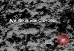 Image of herd of Caribou Alaska USA, 1929, second 44 stock footage video 65675051280