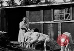 Image of Mount McKinley Alaska United States USA, 1925, second 31 stock footage video 65675051284