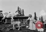 Image of Mount McKinley Alaska United States USA, 1925, second 39 stock footage video 65675051284