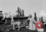 Image of Mount McKinley Alaska United States USA, 1925, second 40 stock footage video 65675051284
