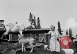 Image of Mount McKinley Alaska United States USA, 1925, second 42 stock footage video 65675051284