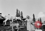 Image of Mount McKinley Alaska United States USA, 1925, second 45 stock footage video 65675051284