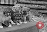 Image of Mount McKinley Alaska United States USA, 1925, second 57 stock footage video 65675051284