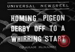 Image of homing pigeons Selby England United Kingdom, 1936, second 3 stock footage video 65675051381