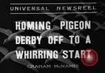 Image of homing pigeons Selby England United Kingdom, 1936, second 7 stock footage video 65675051381