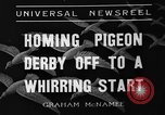 Image of homing pigeons Selby England United Kingdom, 1936, second 8 stock footage video 65675051381