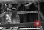 Image of birds Mexico, 1936, second 16 stock footage video 65675051388