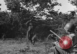 Image of German soldiers Cherbourg Normandy France, 1944, second 56 stock footage video 65675051433