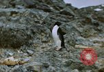 Image of South Pole expedition South Pole, 1939, second 4 stock footage video 65675051520