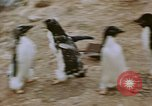Image of South Pole expedition South Pole, 1939, second 45 stock footage video 65675051520