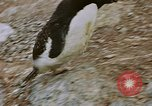 Image of South Pole expedition South Pole, 1939, second 51 stock footage video 65675051520