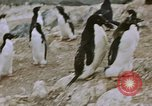 Image of South Pole expedition South Pole, 1939, second 54 stock footage video 65675051520
