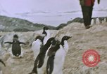 Image of South Pole expedition South Pole, 1939, second 55 stock footage video 65675051520
