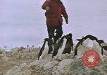 Image of South Pole expedition South Pole, 1939, second 56 stock footage video 65675051520