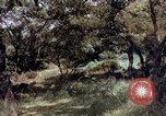 Image of People visiting a forest in their 1939 Ford car United States USA, 1939, second 13 stock footage video 65675051552