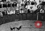 Image of cockfighting Guaynabo Puerto Rico, 1935, second 10 stock footage video 65675052095